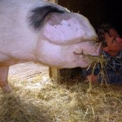 Esther Pig and friend