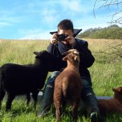 Photographing the lambs